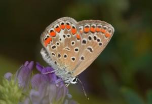 butterflies-810477_1280